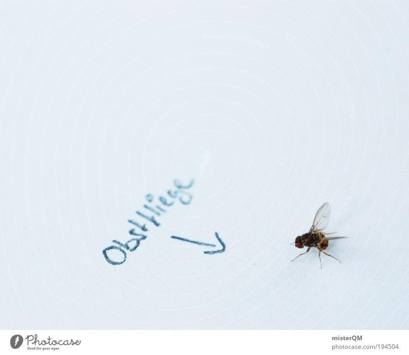 Sündenbock. Tier klein lustig Frucht Fliege fliegen ästhetisch verrückt Flügel Insekt Pfeil Humor Futter Nachbar töten fliegend