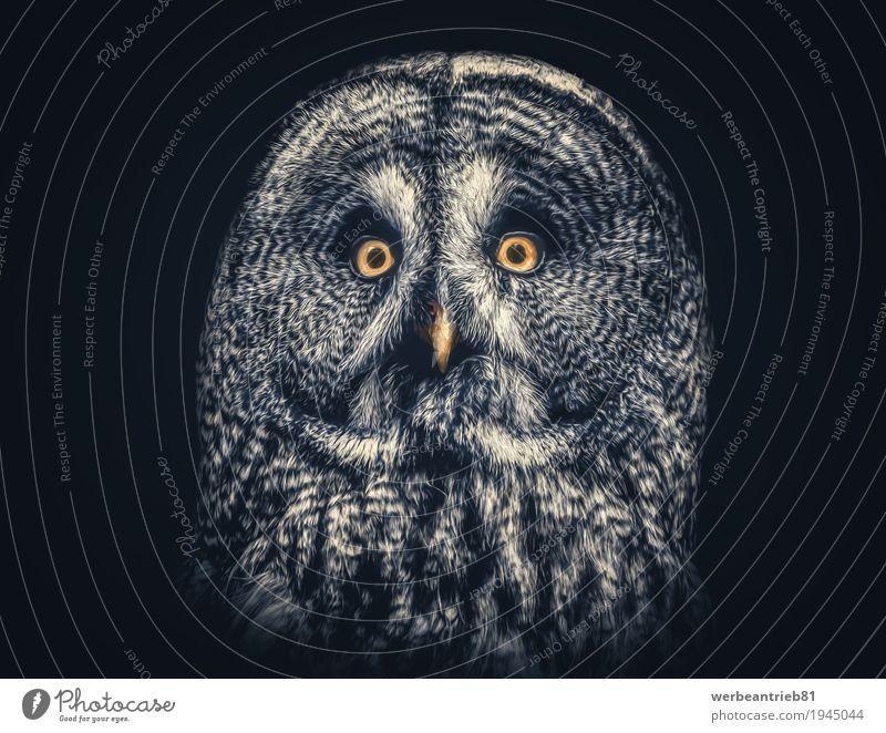 Kunstvolles Eulen Portrait Design Vogel 1 Tier ästhetisch außergewöhnlich elegant exotisch frei Freundlichkeit schön natürlich nerdig Neugier niedlich retro
