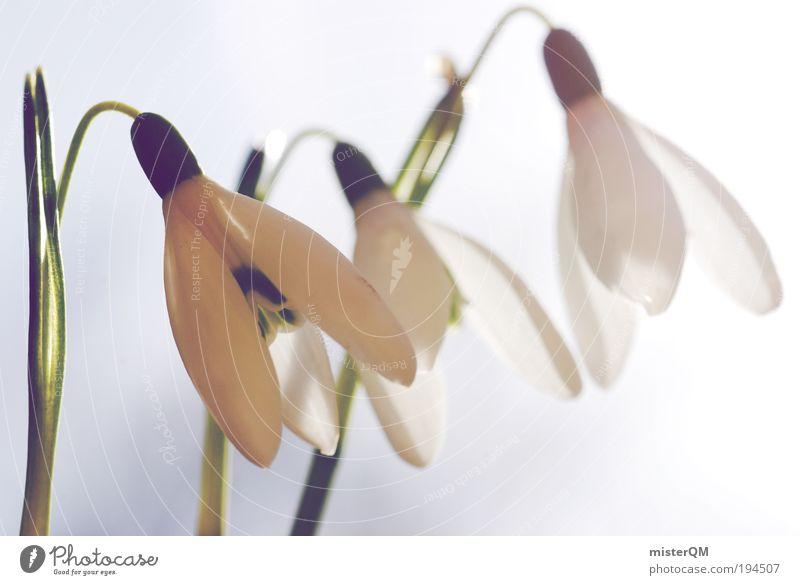 Frühlingsläuter. Natur grün weiß Erholung Landschaft Blüte Zufriedenheit ästhetisch Perspektive Beginn Blühend Schönes Wetter 3 Jahreszeiten Frühlingsgefühle