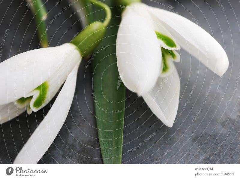 Spring Love. Natur schön weiß Blume grün Pflanze ruhig Schnee Erholung Blüte Frühling Hintergrundbild Umwelt ästhetisch Duft Jahreszeiten