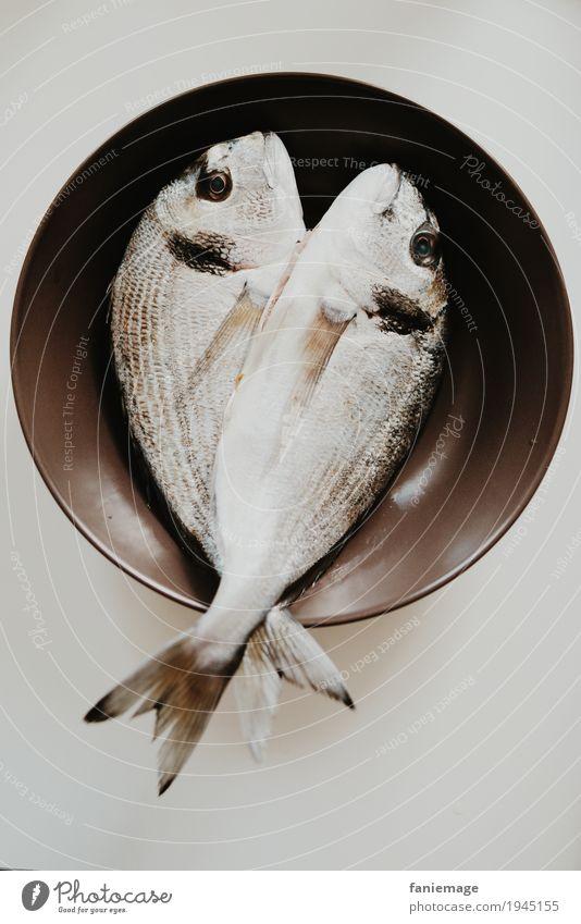 frische Fische Lebensmittel Ernährung Essen Mittagessen gut Gesundheit mediterran Dorade lecker Fischmarkt Teller Schuppen Tod braun 2 fischig glänzend