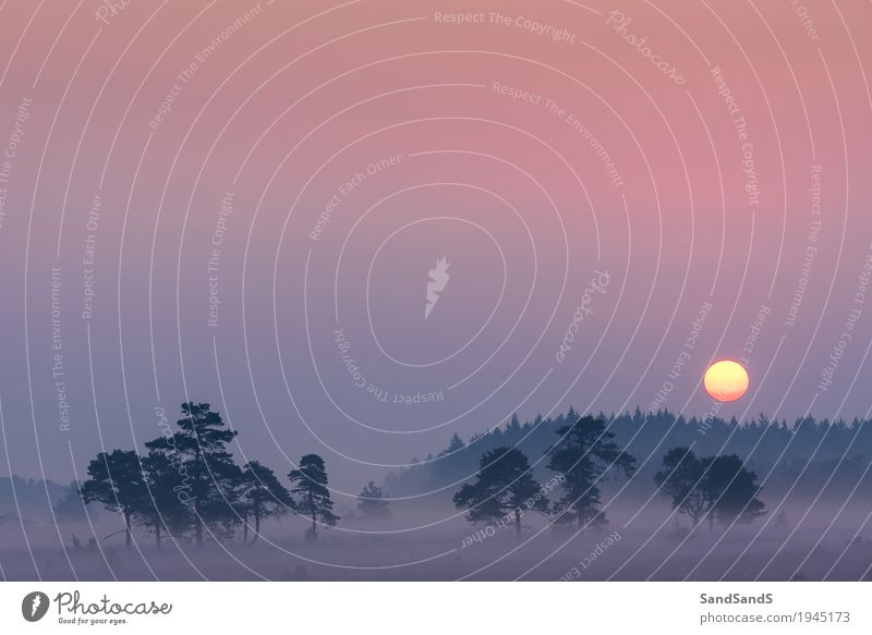 Sonnenaufgang bei Domaine de Bérinzenne Himmel Natur Pflanze Sommer schön Baum Landschaft Umwelt Schönes Wetter Wolkenloser Himmel Belgien Wallonien