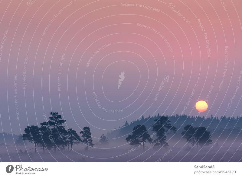 Sonnenaufgang bei Domaine de Bérinzenne Umwelt Natur Landschaft Pflanze Himmel Wolkenloser Himmel Sonnenuntergang Sommer Schönes Wetter schön