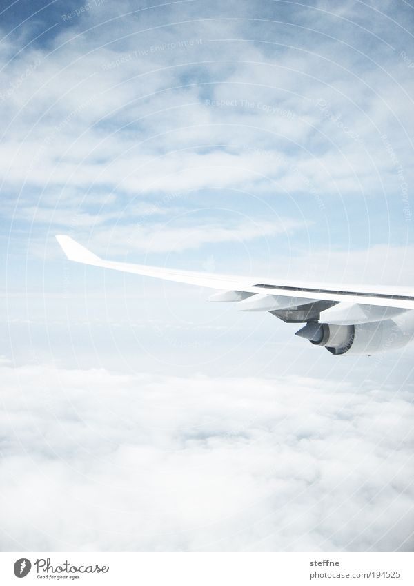 zwischen den Wolken Himmel Ferien & Urlaub & Reisen hell Flugzeug fliegen Tourismus Luftverkehr Tragfläche Schönes Wetter Management Triebwerke hell-blau
