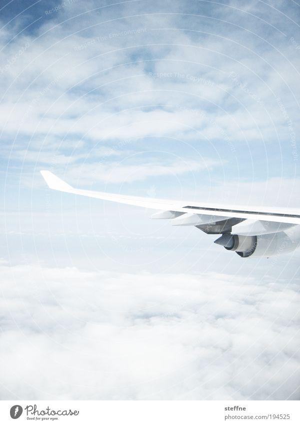 zwischen den Wolken Himmel Ferien & Urlaub & Reisen Wolken hell Flugzeug fliegen Tourismus Luftverkehr Tragfläche Schönes Wetter Management Triebwerke hell-blau Arbeit & Erwerbstätigkeit blau Luftaufnahme