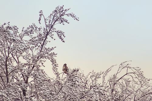 februar... Baum Winter kalt Schnee Wildtier Eulenvögel Erlen Kauz Uhu