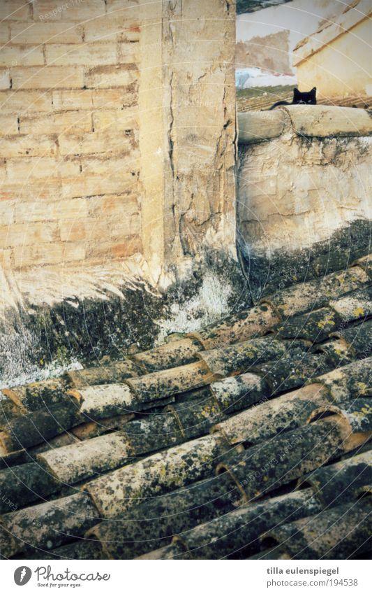 suchbild oder die katze auf dem (heißen blech)dach Haus Tier Wand Stein Mauer Katze Gebäude Angst Dach beobachten Dorf Neugier Backstein Jagd verstecken