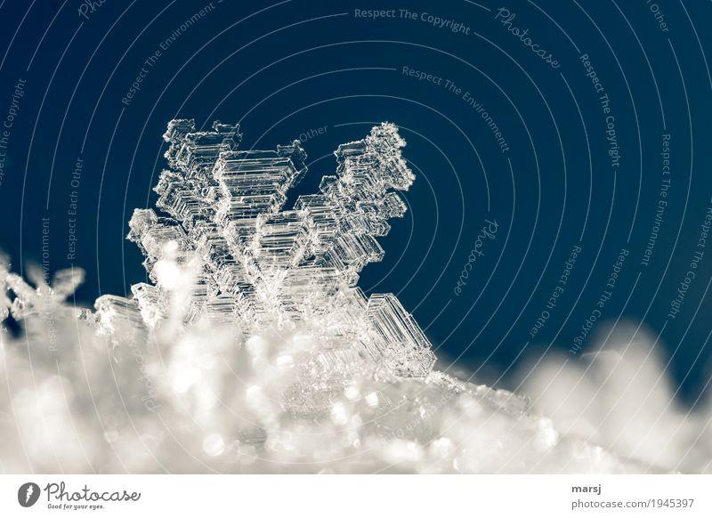 unscheinbares Detail I aber ein Kunstwerk wer es vergrößert Natur blau Winter klein außergewöhnlich leuchten Eis glänzend ästhetisch authentisch fantastisch