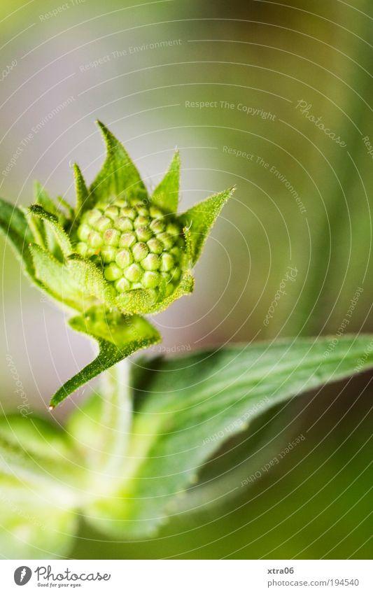 nach oben Natur Blume grün Pflanze Blatt Blüte Frühling geschlossen ästhetisch Wachstum einfach zart Blühend sanft Blütenknospen streben