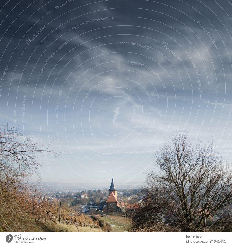 weinsberg am weinsberg Umwelt Natur Landschaft Winter Nutzpflanze Feld Hügel Dorf Kleinstadt Kirche Religion & Glaube Weinberg Baum Kirchturm Baden-Württemberg
