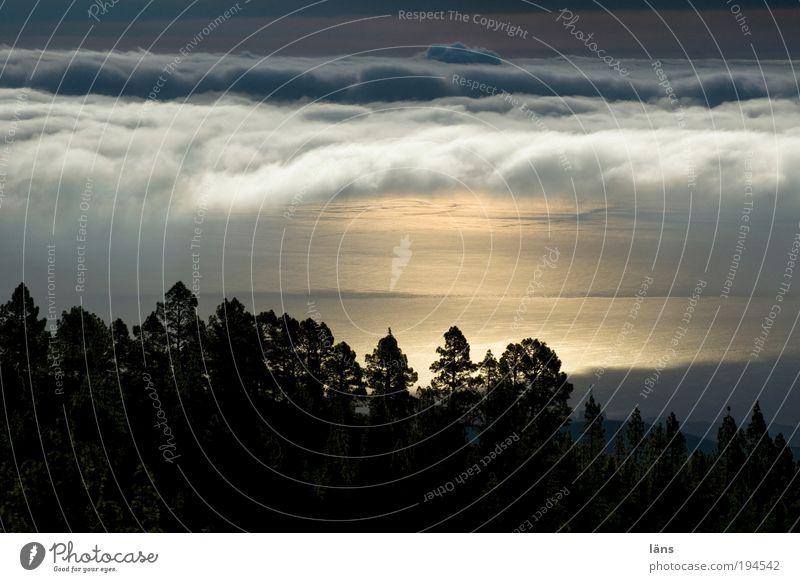 der frühe vogel Natur Himmel Meer Ferien & Urlaub & Reisen Wolken Wald Berge u. Gebirge ästhetisch einzigartig Sonnenaufgang Teneriffa