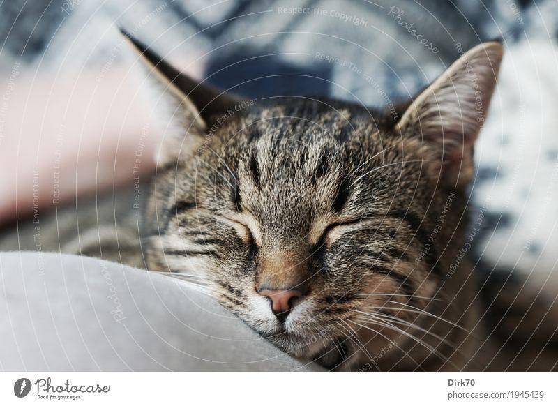 Sweet, soft and lazy Katze Mensch Hand Erholung Tier ruhig Beine Glück Wohnung Häusliches Leben Zufriedenheit liegen Idylle Warmherzigkeit Schönes Wetter weich