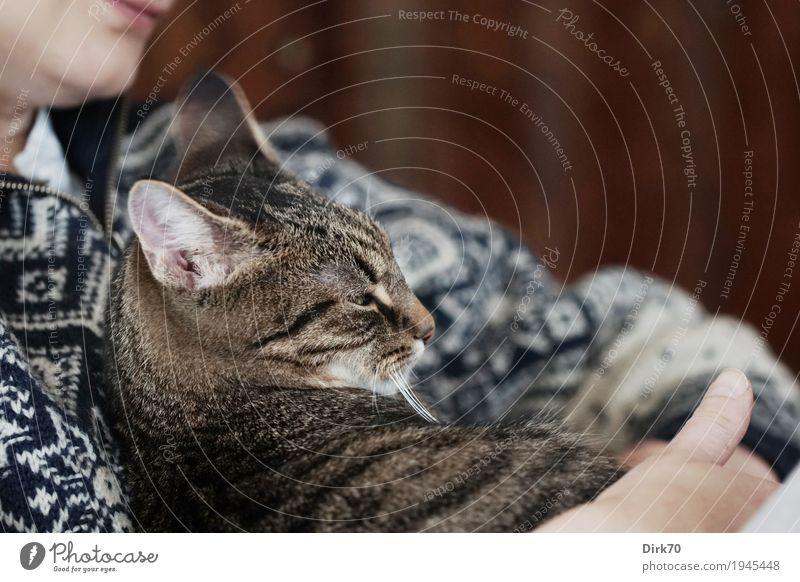 Geborgenheit Häusliches Leben Wohnung Wohnzimmer Mensch feminin 1 Pullover Norwegerpullover Haustier Katze Hauskatze Tigerkatze Tier liegen Blick kuschlig