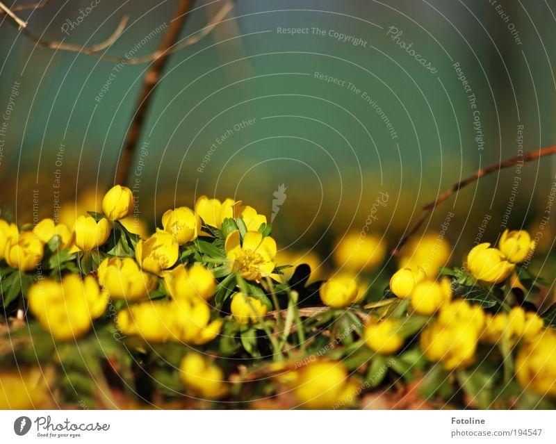 Der Frühling ist da! Natur schön Blume grün Pflanze Blatt gelb Wiese Blüte Frühling Park Wärme Landschaft Luft hell Wetter