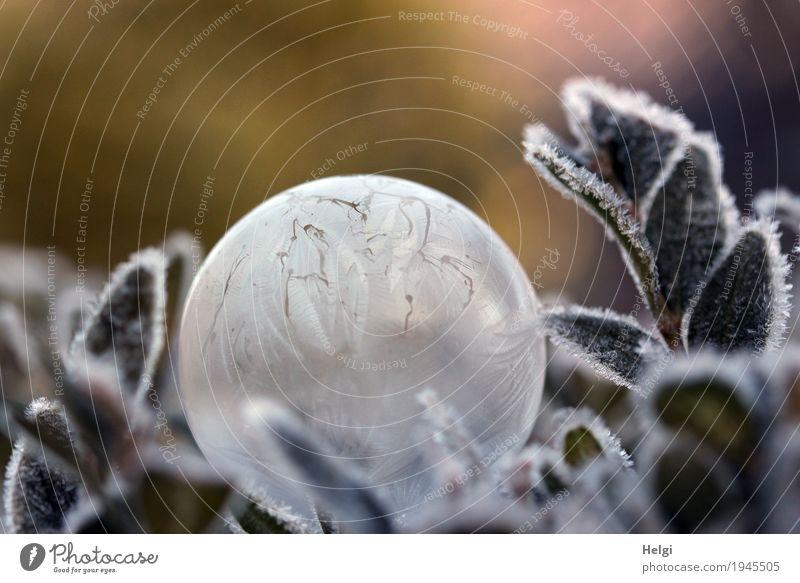 filigrane Eiskunst V Natur Pflanze schön weiß Blatt Winter Umwelt kalt klein Garten außergewöhnlich grau braun liegen ästhetisch