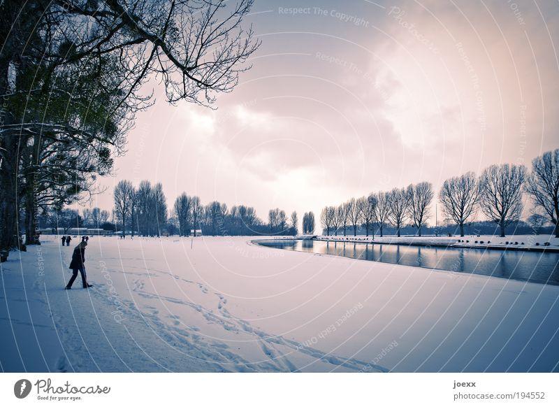 Kick den Winter Mensch Baum Wolken kalt Schnee Park Landschaft gehen Umwelt Teich Aggression