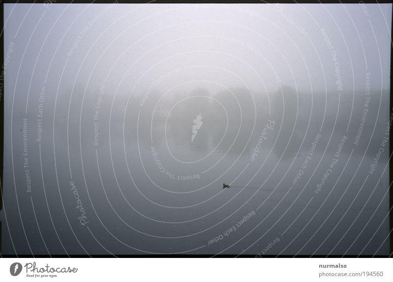 Einsam. Natur Wasser Pflanze Tier ruhig Landschaft Herbst Küste Denken Vogel Kunst Horizont Schwimmen & Baden Klima Wildtier Nebel