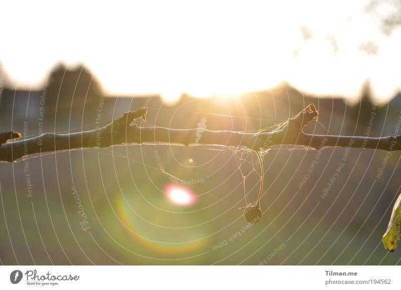 Spätsommergegenlicht Natur Pflanze Luft Himmel Sonne Sonnenaufgang Sonnenuntergang Sonnenlicht Sommer Schönes Wetter Baum Obstbaum Feld Franken Unterfranken