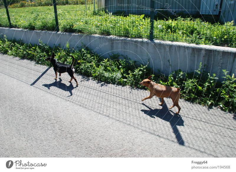 Spaziergang Ferien & Urlaub & Reisen wandern Schönes Wetter Park Wiese Dorf Stadtrand Tier Haustier Hund 2 füttern gehen frech Freundlichkeit Fröhlichkeit