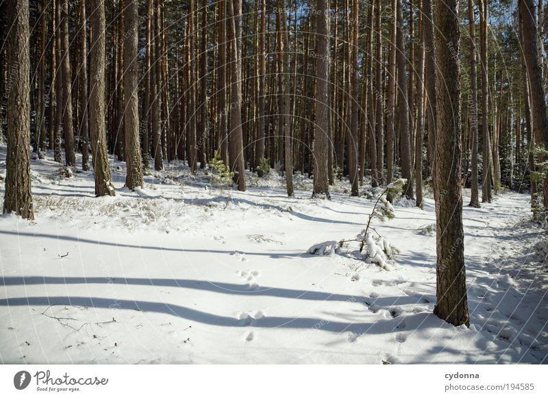 Fussspuren Natur Baum Winter ruhig Wald Erholung Umwelt Landschaft Leben Schnee Freiheit Wege & Pfade träumen Zeit Eis Zufriedenheit