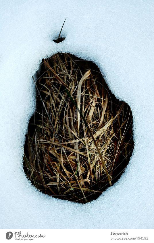 Tauwetter´s Natur Landschaft Schnee Gras erdig Grasbüschel Schneelandschaft Farbfoto Außenaufnahme Tag Licht Kontrast
