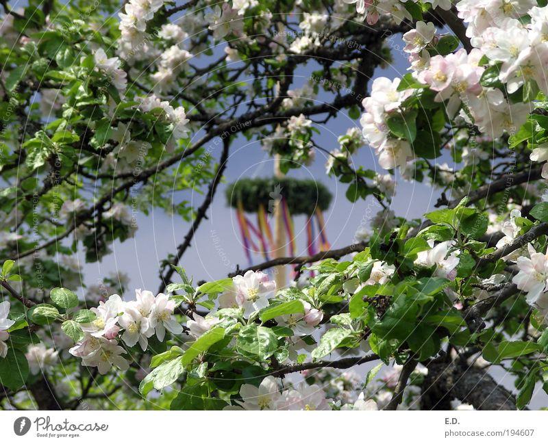 Der Frühling zeigt sein buntes Band... harmonisch Wohlgefühl Zufriedenheit Sinnesorgane Erholung ruhig Duft Natur Pflanze Himmel Wetter Baum Blatt Blüte Garten