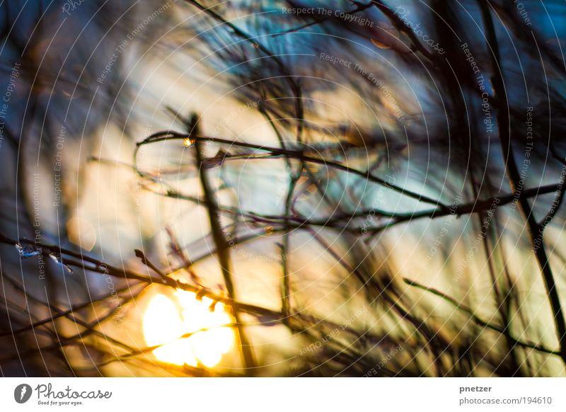 Sonnensehnsucht Umwelt Natur Landschaft Sonnenaufgang Sonnenuntergang Pflanze Sträucher Park außergewöhnlich Duft fantastisch glänzend Glück Unendlichkeit heiß