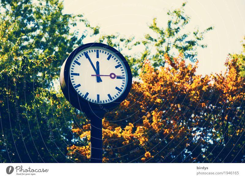 5 vor 12 Sommer Baum Blatt Herbst Zeit Gesundheitswesen Uhr Angst Energiewirtschaft Ast Zifferblatt bedrohlich Industrie rund Symbole & Metaphern Zukunftsangst