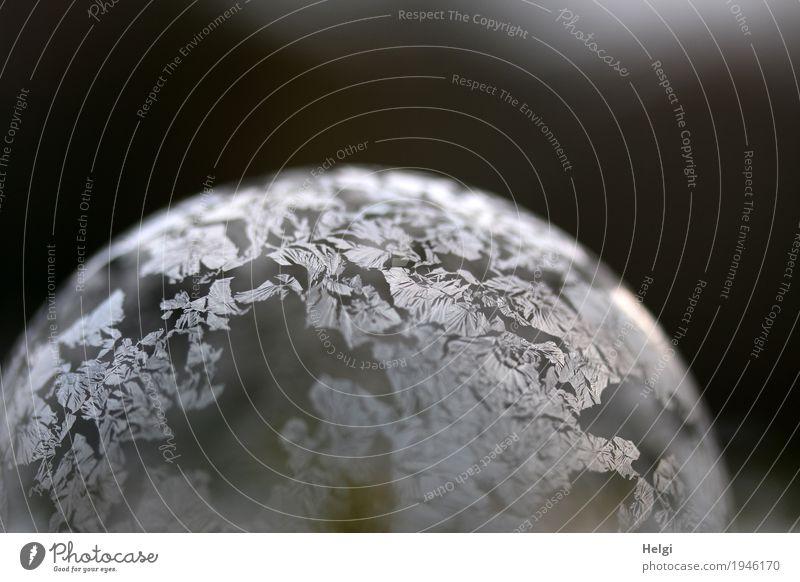 filigrane Eiskunst VI schön weiß ruhig Winter kalt Kunst außergewöhnlich grau liegen ästhetisch Kreativität einzigartig rund Wandel & Veränderung Frost