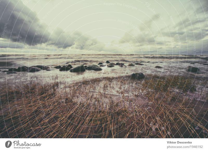 Reed brach unter dem starken Wind am Sandstrand zusammen Himmel Natur Ferien & Urlaub & Reisen blau schön weiß Landschaft Meer Wolken Strand Küste Horizont