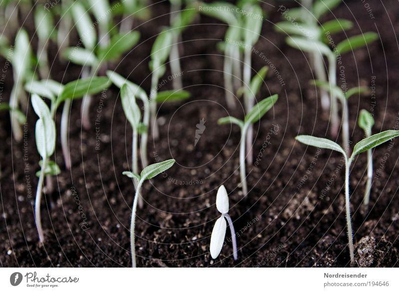 Aus der Reihe tanzen Natur Pflanze Frühling Gesundheit außergewöhnlich Wachstum Ernährung beobachten einzigartig Zeichen Beruf Gemüse Überraschung Verzweiflung