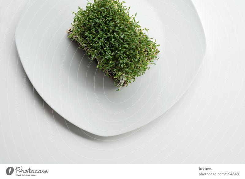 Kressen grün Stil Gesundheit Lebensmittel Ernährung Kochen & Garen & Backen Küche Wellness genießen Gastronomie dünn Restaurant Teller Bioprodukte ökologisch
