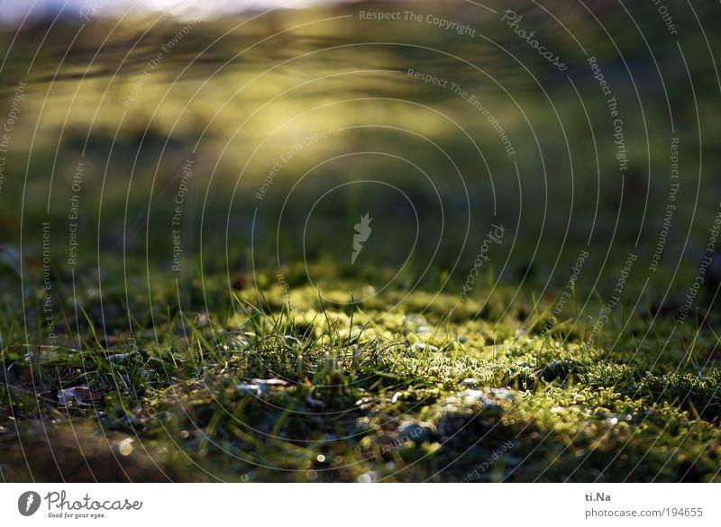 Licht in Sicht Umwelt Natur Landschaft Tier Pflanze Gras Moos Park Wiese leuchten Wachstum hell natürlich gelb grün Zufriedenheit Farbfoto Gedeckte Farben