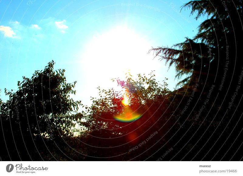 sunshine in your heart Himmel Baum Sonne blau Sommer Wolken Wald Garten Blendenfleck
