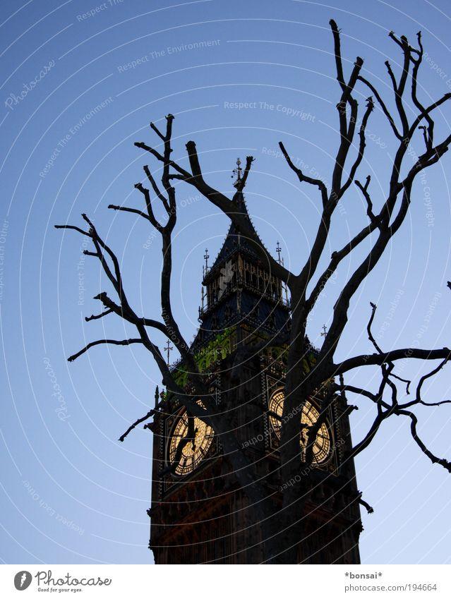 dickes B! Tourismus Sightseeing Städtereise Kultur Wolkenloser Himmel Baum London Hauptstadt Kirche Turm Architektur Sehenswürdigkeit Wahrzeichen Big Ben alt