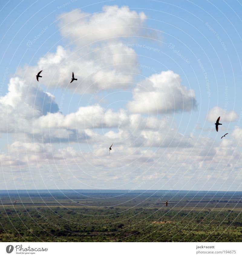 Frei wie ein Vogel Ferne Safari Natur Landschaft Tier Wolken Sommer Klimawandel Wärme Savanne fliegen einfach blau grün friedlich authentisch Ewigkeit exotisch