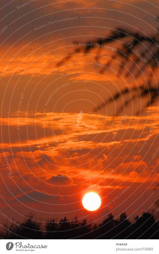 sundown Sonnenuntergang Wald Himmel