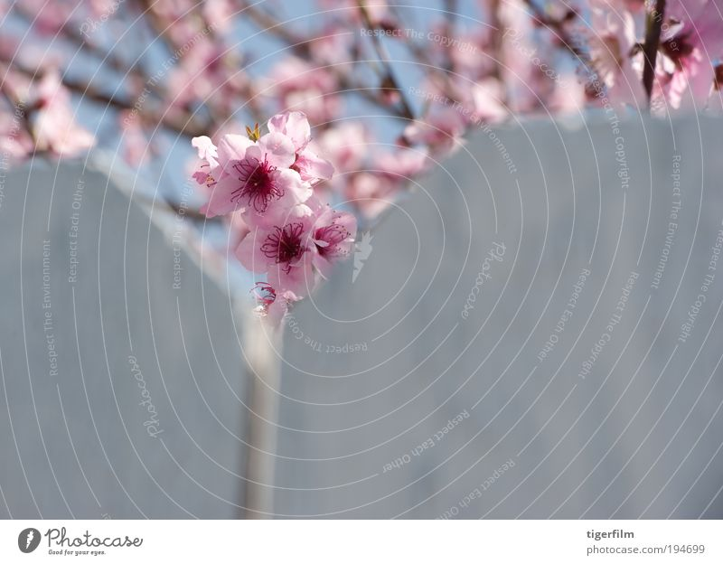 schön Blume Gipfel Blütenblatt Berge u. Gebirge