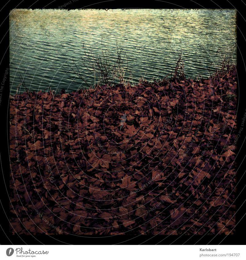 la sarre. Lifestyle Stil Design Freiheit Wellen Umwelt Natur Wasser Herbst Winter Klima Blatt Küste Flussufer Linie Verzweiflung ästhetisch Bewegung chaotisch