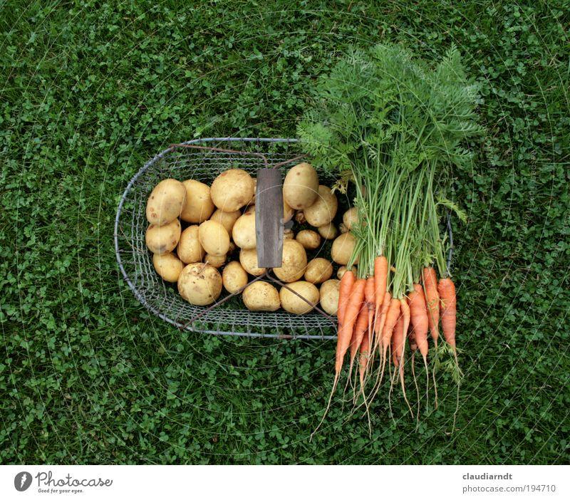 Gesundfood Lebensmittel Gemüse Kartoffeln Möhre Ernährung Bioprodukte Vegetarische Ernährung Gesundheit Gartenarbeit Sommer Nutzpflanze Feld frisch grün