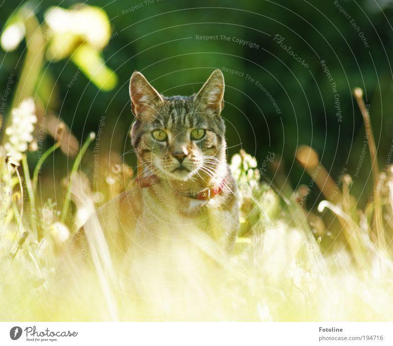 Ich seh dich! Katze Natur Pflanze schön Sommer Sonne Landschaft Tier Umwelt Wärme Auge Wiese Gras Garten hell Park