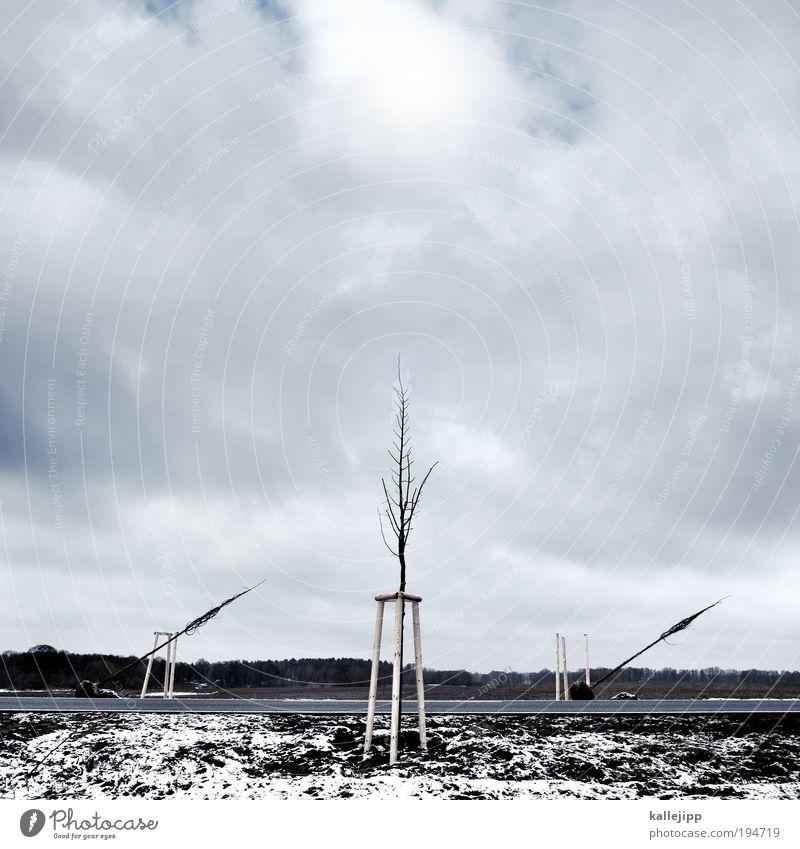 kreuzung Erde Wolken Horizont Winter Eis Frost Schnee Pflanze Baum Verkehr Verkehrswege Personenverkehr Öffentlicher Personennahverkehr Güterverkehr & Logistik