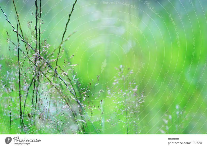 Lichtung Gesundheit Wohlgefühl Sinnesorgane ruhig Gartenarbeit Gärtner Natur Frühling Sommer Schönes Wetter Pflanze Gras Sträucher Wildpflanze Park Wiese