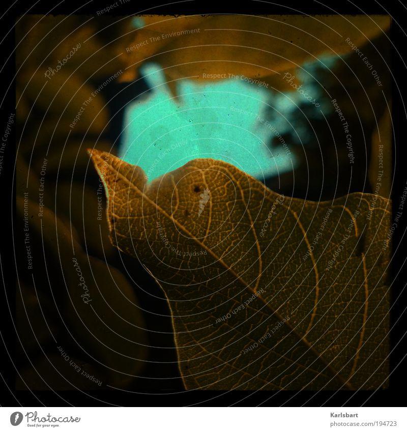 heaven's open. Lifestyle Stil Design Sommer Kunst Umwelt Natur Himmel Sonne Sonnenlicht Klima Pflanze Baum Sträucher Blatt Grünpflanze Nutzpflanze Linie