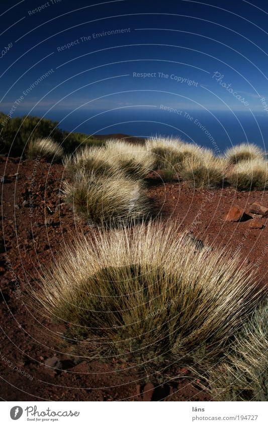 Buschland Umwelt Natur Landschaft Pflanze Erde Sand Luft Wasser Himmel Horizont Schönes Wetter Sträucher Berge u. Gebirge Wandel & Veränderung Teneriffa