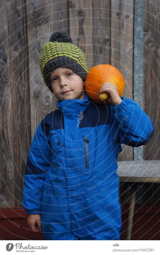 Kürbisernte maskulin Kind Kindheit 1 Mensch 3-8 Jahre Natur Herbst Winter Nutzpflanze Garten Feld Mütze authentisch einfach Freundlichkeit frisch Gesundheit
