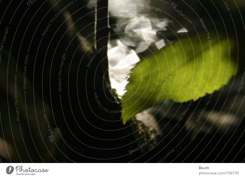"""""""Hoffnung"""" für ti.Na Natur Baum Blatt dunkel Erholung Herbst träumen Traurigkeit Park Regen Angst glänzend Wassertropfen nass frisch"""