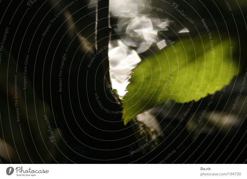 """""""Hoffnung"""" für ti.Na Natur Wassertropfen Herbst Regen Baum Blatt Grünpflanze Park Flussufer Erholung frieren glänzend hängen kämpfen leuchten tragen träumen"""