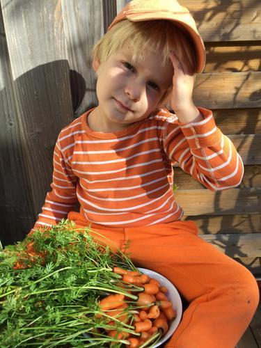 Ernte - klein aber fein! Herbst Garten orange Kindheit frisch authentisch Schönes Wetter lecker Möhre