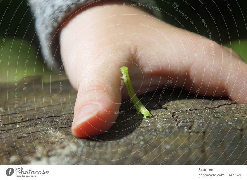 Kontakt feminin Kind Mädchen Kindheit Haut Hand Finger 1 Mensch Umwelt Natur Tier Sommer Schönes Wetter Garten Wurm klein natürlich grün Raupe krabbeln Holz